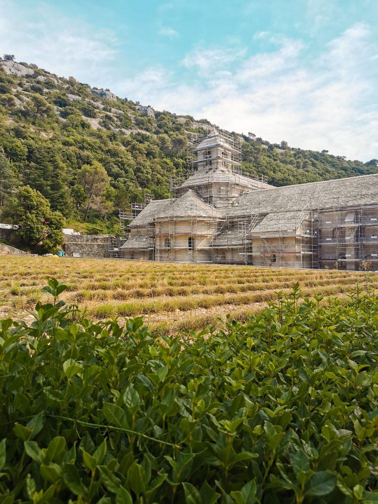 abbazia Senanque provenza